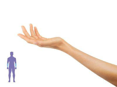 brazo levantado para mostrar el antebrazo